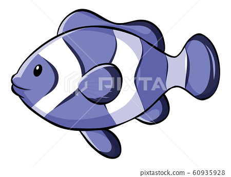 Bllue clownfish on white background 60935928