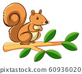 Cute squirrel on white background 60936020