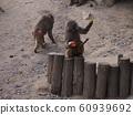 母猴和小猴 60939692