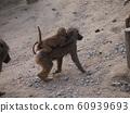 小猴和母猴 60939693