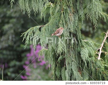 鳥 60939719