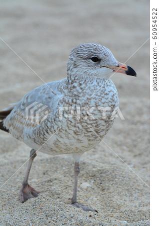 熱帶夏季海灘美麗隻野生鳥 60954522