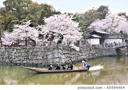 Wakayama Castle in full bloom 60994464