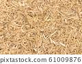 Suma root (Pfaffia paniculata) 61009876
