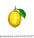 Lemon citrus fruit with green leaf isolated sketch 61013207