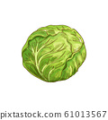 Cabbage head isolated green vegetable raw food 61013567