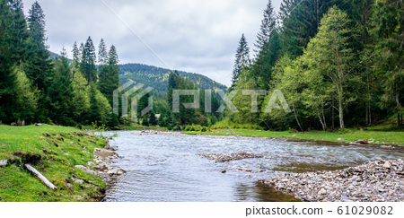 mountain river in the forest 61029082