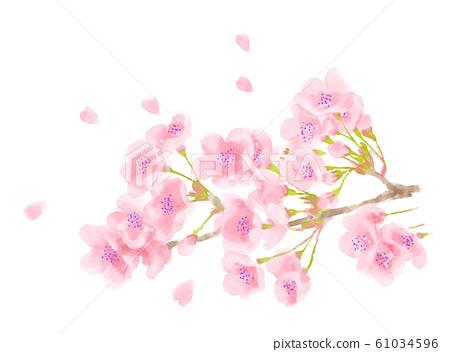 樱花盛开 61034596