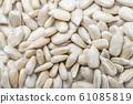 sunflower seed 61085819
