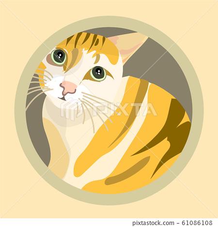 橘白猫 61086108