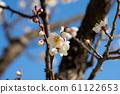 ดอกพลัม (มีนาคม) 61122653