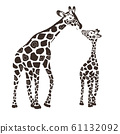 Two cute giraffes isolated on a white background. 61132092
