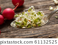 Fresh radish sprouts on a metal spoon 61132525
