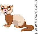 Cartoon funny ferret isolated on the white background 61152103