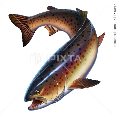 Rainbow trout fish on white background realistic illustration. Trout delicacy. Wild river fish isolated. 61158047