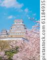 姬路城和櫻花 61184935
