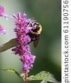 꿀을 찾는 벌 61190756