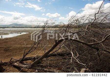 앙상한 나뭇가지 61191442