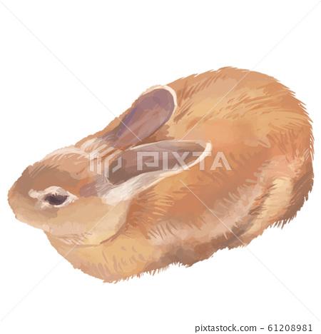 Real illustration rabbit 61208981