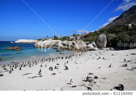 남아공 볼더스비치 해변 자카스 펭귄 서식지의 아름다운 풍경 61216060