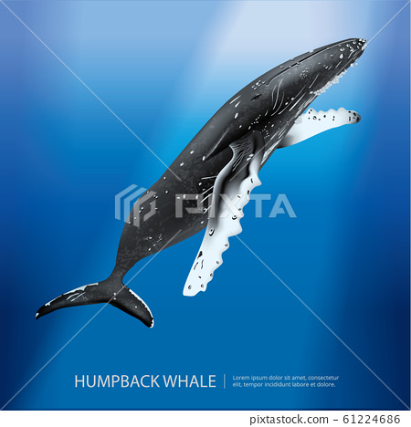 Humpback Whale Under the Sea Vector Illustration 61224686