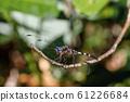 Dragonfly in rainforest Madagascar wildlife 61226684