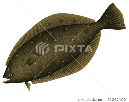 Flounder illustration (3D) 61232109