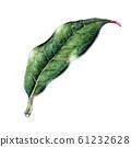 One leaf 61232628