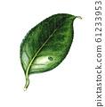 Leaves 61233953