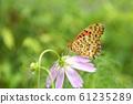 宇宙和蝴蝶 61235289