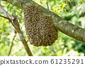 蜜蜂在蜜蜂 61235291
