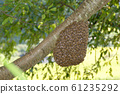 蜜蜂在蜜蜂 61235292