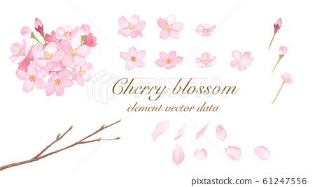 櫻花元素設置水彩插圖跟踪矢量 61247556