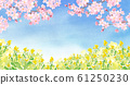 Walking path with blue sky, rape blossoms and cherry tree-watercolor illustration 61250230