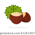 Chestnut fruit in green peel and peeled chestnut fruit flat isolated 61261467