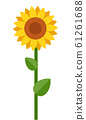One blooming sunflower vector flat isolated 61261688