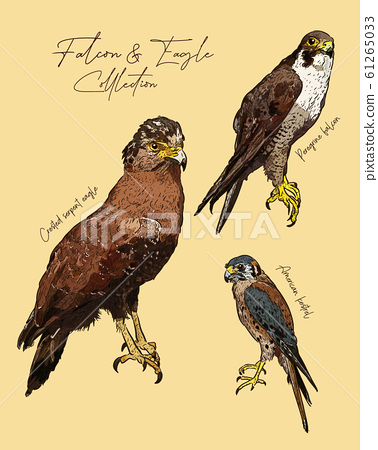 falcon and eagle hand draw sketch vector. 61265033
