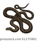 Python in Vintage style on a black background. Serpent or poisonous viper snake. Engraved hand drawn 61275862