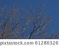 Winter landscape, winter scenery 61286326