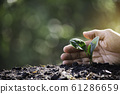 Hand protecting a green young plant with growing 61286659