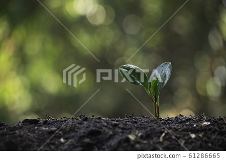Seedling and plant growing in soil and copy space 61286665