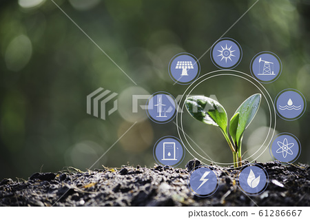 Seedling and plant growing in soil and copy space 61286667