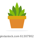 Indoor green plant in a pot vector flat isolated 61307902