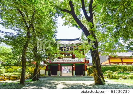 배롱나무,표충사,재약산,밀양시,경남,한국 61330739