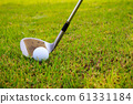 Golf club and ball in grass 61331184
