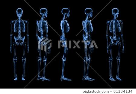 set of human skeleton x-ray 61334134