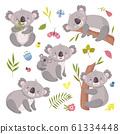 Koala bear. Australia animal, baby hugging mom. Isolated koalas on tree, flowers and nature elements. Vector exotic cuddly characters set 61334448
