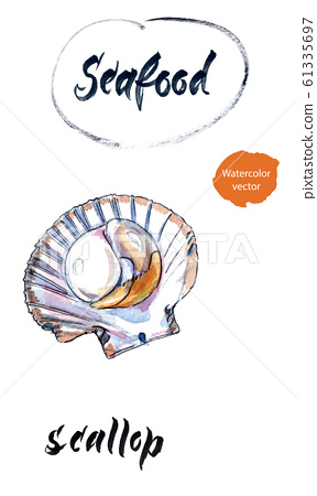 Opened scallop, mussel, seafood. Hand drawing of scallop as a common seafood delicacy. Edible underwater scallop, healthy organic shellfish food, hand drawn watercolor illustration 61335697
