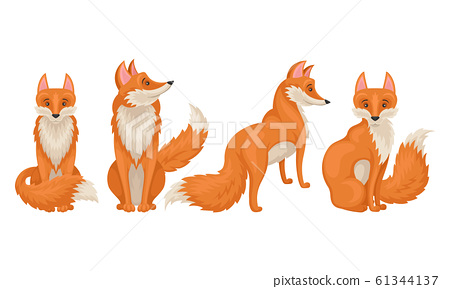 Red fox in Different Poses Vector Illustrations Set 61344137