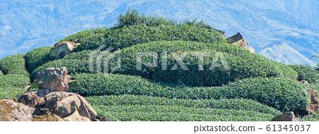 茶葉種植園花園休閒場茶園 61345037